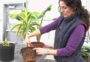 video: How to water a plant!