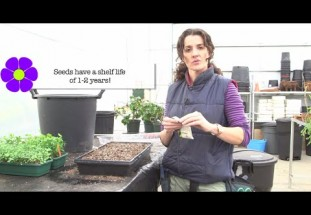 video: How to grow seeds
