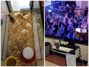 Egg to Chick Harmony