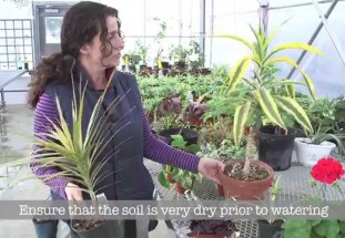 video: 7 Top indoor plants