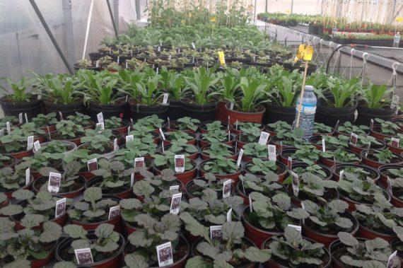 Horticulture News - Big Sale!